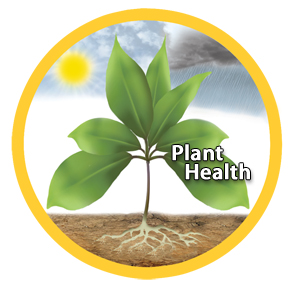 Departments_-_Plant_Growth_Image-planthealth