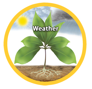 Departments_-_Plant_Growth_Image-weather